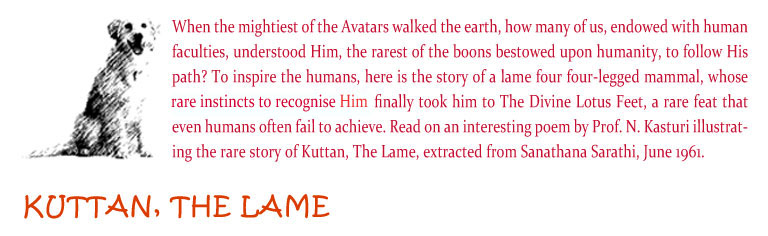 Kuttan, The Lame: When the mightiest of the Avatars walked the earth, how many of us, endowed with human faculties, understood Him, the rarest of the boons bestowed upon humanity, to follow His path? To inspire the humans, here is the story of a lame four four-legged mammal, whose rare insticts to recognise HIM, finally took him to The Divine Lotus Feet, a rare feat that even humans often fail to achieve. Read on an interesting poem by Prof. N. Kasturi illustrating the rare story of Kuttan, The Lame, extracted from Sanathana Sarathi, June 1961.