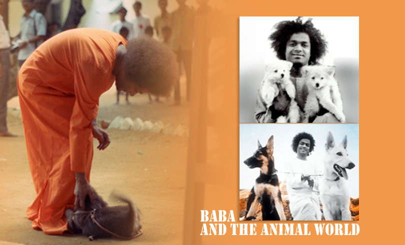 Baba and the Animal World…